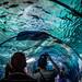 Marineland - aquarium