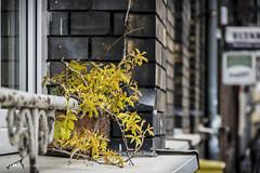 Odrobina żółci w szarości miasta... (sedes_85) Tags: poznań wilda okno yellow power