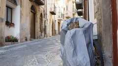 Hello kitty (El.buitre) Tags: cat sicily sicilia animal pet street italy holiday summer a6000 sony bycicle