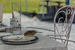 Mayrhofen im Zillertal    |   To the Scavenger... the Spoils (JB_1984) Tags: bird sparrow housesparrow leftovers crumbs plate glass table terrace konditorei mayrhofenimzillertal tyrol tirol austria österreich