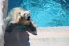 水族館43 (ののリサを信じろ) Tags: 水族館 白熊 カエル 蛙 シロクマ なまはげ 獅子舞 神社 桜 鯉のぼり アシカ