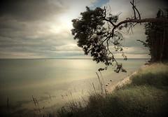 Zuneigung (Wunderlich, Olga) Tags: rügen insel deu wasser steine windflüchter baum gras natur landschaft mecklenburgvorpommern himmel wolken naturaufnahme naturfoto