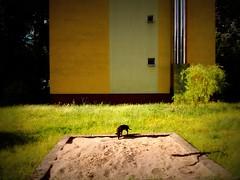 Sandpit (fagion) Tags: piaskownica ochota pies dog perro chien poland polska warsaw warszawa