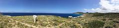 Panoramic View with wild horses @ Arta Coast, Mallorca, Spain ([ PsycBob ]) Tags: mallorca spain espana spanien küste coast seashore pferde horses wild wildpferde blau blue bleu meer sea landscape