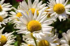 (ErrorByPixel) Tags: flower flora nature closeup macro 100mm handheld pentax k5 errorbypixel pentaxart