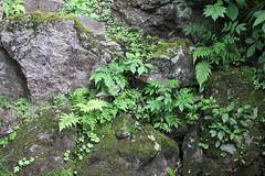 IMG_2629 (normafincher) Tags: japan nikko nikkonationalpark