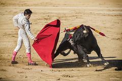 Elegance in the Face of Danger (rsusanto) Tags: matador bullfight el torro bull madrid spain action