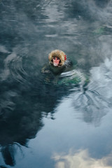 JIGOKUDANI (spaceabstract) Tags: animal baby bape bath cold freezing hotspring japan japanese japanesemacaque jigokudani jigokudanimonkeypark macaque nagano nationalpark nature onsen snow snowmonkey snowy sony travel wanderlust wildmonkeys winter