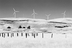 Greenville Road (Wayne-K) Tags: bw california film greenvilleroad hoyaredfilter ilford ilfordxp2super400 livermore nikon nikon105mmf25ais nikonfm2 windpower windmills