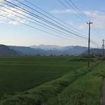 panorama, rice paddies, looking south thumbnail