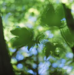 Bokeh (2) @ Amsterdamse Bos (PaulHoo) Tags: kowa six film mediumformat analog bokeh dof amsterdamse bos forest woods light backlit 120mm squareformat