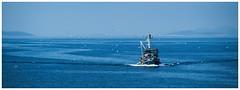 fishing boat and the gulls (stefan.bauer) Tags: sea gull seagull gulls seagulls blue water croatia fishingboat fishing boat