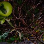 Green Tomatos thumbnail