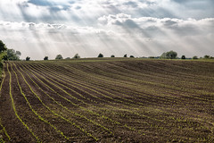 Sunlight (jamesromanl17) Tags: agriculture farm field crop landscape nature soil farmland rural outdoors growth pasture countryside summer sky cropland plow skies clouds cloud cloudscape cloudy sun sunlight light canon cheshire england eos 5d
