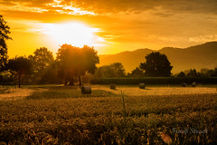 Goldener Sonnenaufgang (strack_frank) Tags: schwarzwald morgenlicht sonnenaufgang feld golden sunrise blackforest field morninglight samsung nx30 nx heuballen hay wonderful
