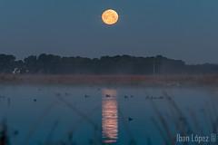 Reflejo (Iban Lopez (pepito.grillo)) Tags: d90 amanecer lagunasdelrasodeportillo luna moonlight dawn laguna ©ibanlópez