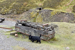 2017-05-17 Nenthead Mines 06 (John Carter 1962) Tags: narrowgauge industrialrailway