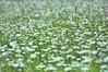 Blumenwiese (karinlübcke) Tags: natur graeser margeriten