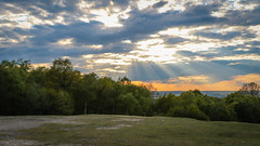 Epping Forest (PhredKH) Tags: eppingforest dusk sunrays bluesky clouds sunset goldensky goldenhour greengrass green openspace trees outdoor outdoorphotography canon canoneos canonphotography sky phredkh fredkh