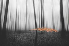 foggy forest II (digital_underground) Tags: forest mood fog mist haze leaves laub wood tree trees germany wald