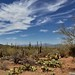 Blue Skies and Wisps of Clouds Above the Deserts of Saguaro National Park (Tucson Mountain District)
