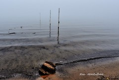 lakeside park beach no more (Rex Montalban Photography) Tags: rexmontalbanphotography portdalhousie volleyballposts lakeontarioisupatarecordlevel lakesidebeach
