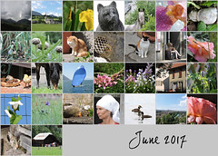 June 2017 mosaic (keepps) Tags: month mosaic bighugelabs