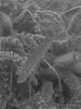 Auenheim-20170629-1056 (opa guy) Tags: allemagne leutesheimauenheim poissonfishfisch brochet poissondeaudouce underwaterdivingtauschenplongée