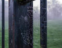 Ivy Road Rec December 11, 2013 (pablodiablo2011) Tags: fog ivyroadrec southgate webs