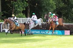 Racing at Cartmel, Cumbria. (konstantynowicz) Tags: cumbria cartmel horseracing steeplechase endeavor red riverman redriverman domtaline polkarenix