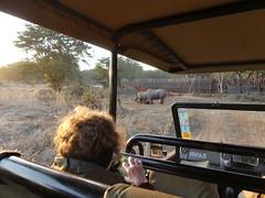 P1140595 Zimbabwe (29) (archaeologist_d) Tags: zimbabwe zambezinationalpark wildlife blackrhinoceros rhinoceros africa southernafrica safari