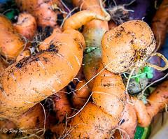 Allotment Sunday 2 (Raginmund) Tags: veg beans allotment nikon