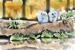What to Do When It's Hot Outside (C. VanHook (vanhookc)) Tags: digitalpainting digitalphotoediting digitalpaintbrush digitaleffects twobirds coloring