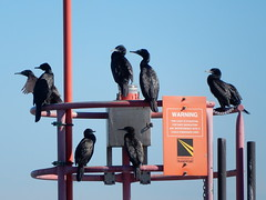 Cormorant Warning (mikecogh) Tags: glenelg cormorants warning sign shags