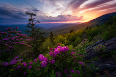 The Glow on the Rhododendrons  in Blue Ridge Parkway - 2278 (J & W Photography) Tags: 2017 appalachia blueridgeparkway catawbarhododendron jwphotography june northcarolina tennesse blossom clouds dusk flameazaleas flower grass landscape nature plantappalachiamountains rhogodendron sunset tree