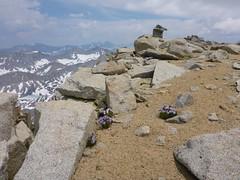P1040213 (steph_abegg) Tags: 2017 california notmyphotos