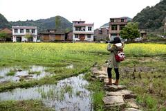 (MelindaChan ^..^) Tags: hunan china 湖南 rapeseed field 油菜花田