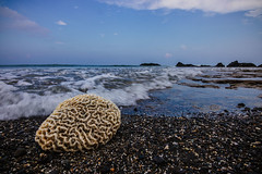 Brain Waves (tirthankargupta) Tags: landscape travel wideangle canon color sea beach