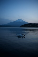 Blue Love (小川 Ogawasan) Tags: japan japon lake swan fujisan