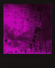 Magenta Muertos Palms (tobysx70) Tags: the impossible project tip polaroid slr680 frankenroid sx70 door rollers red black blackandred duochrome film for 600 type cameras instant blackframe impossaroid dia de los muertos celebration palms hollywood forever cemetery santa monica blvd boulevard angeles la california ca magenta palm trees clouds cloudporn silhouette route 66 rt rte mint lens set yellow filter digitally manipulated toby hancock photography