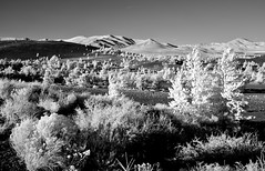 Desert Plants and Lava Soil (Neal3K) Tags: idaho ir infraredcamera kolarivisionmodifiedcamera cratersofthemoon nationalmonument lava volcanoes bw blackandwhite