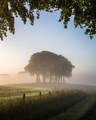 Arch (Dylan Nardini) Tags: morning summer 2017 nikon ravenstruther farmland mist southlanarkshire trees sunrise scotland d810 countryside path
