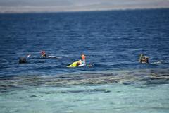DSC_0239 (russellfenton) Tags: egypt marsaalam nikon nikon7200 7200 corayabeach steigenberger snorkelling sea boat