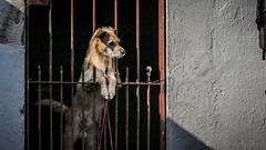 12junho_-17 (Laércio Souza) Tags: laerciosouza cachorros rolesp saopaulo periferia chaveiro igreja templo brasil