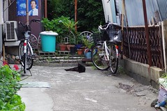 Today's Cat@2017-06-21 (masatsu) Tags: cat thebiggestgroupwithonlycats catspotting pentax mx1