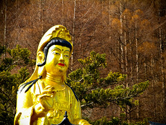 A DI DA PHAT QUAN THE AM BO TAT DAI THE CHI BO TAT GUANYIN KWANYIN BUDDHA 8500 (ketnoivietnam) Tags: amazing affectionate amitabha architecture art asia avalokitesvara awesome bangkok beautifull beijing palace bhutan bodhisattva bouddha buddha tooth relic temple buddhism buddhist china chinatown chua excellent fantastic flickraward gold golden guanyin hainan hdr history hong kong indian information japan korea kuanim kuanyin kwanyin laos laughing light lotus flower lovely mantra meditation mount emei museum
