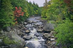 Creek in Adirondack (Sublime-Focus) Tags: adirondack upstate new york creek nature nikon d5300