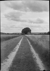 (salparadise666) Tags: voigtländer bergheil 9x12 heliar 135mm f32 1sec orange filter fomapan 100 caffenol rs 14min nils volkmer vintage camera large format path lowlands germany northern plains bw black white monochrome landscape rural nature plate