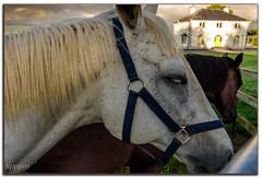 White horse...White house. (tippjim) Tags: whitehorse tippjim tipperary nikon2470