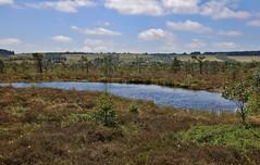 swamp lake (Hugo von Schreck) Tags: hugovonschreck swamplake sumpfsee germany europe canoneos5dsr tamron28300mmf3563divcpzda010 greatphotographers onlythebestofnature